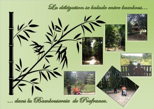 apf,sorties,visite bambouseraie